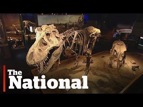 Dinosaur Museum Sneak Peek