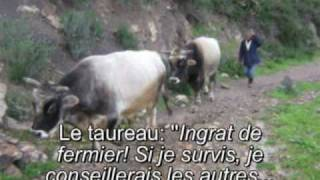 IDIR Azger - Azguer (le taureau) Avec traduction