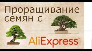 опыт проращивания семян с Али-Экспресс. Бонсай. Советы при покупке товаров