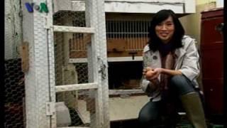"""Beternak Ayam di Amerika - Dunia Kita """"Ep. Paskah"""" 9 April 2010"""