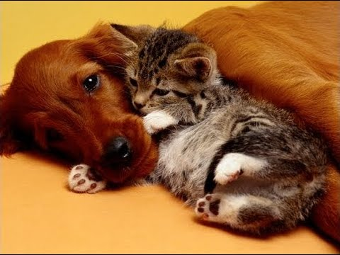 Image result for cat preaching to dog -images