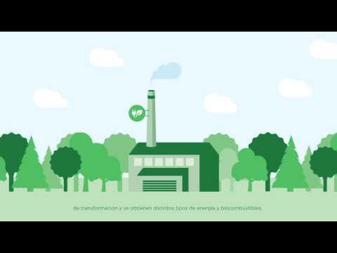 Biomasa - La energía de la naturaleza (BIOPLAT)