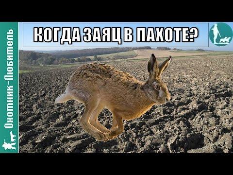 Когда заяц уходит