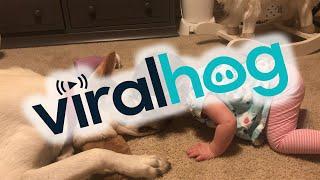Dog Returns Kisses from Infant Girl || ViralHog