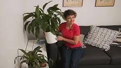 Varjoa sietävät huonekasvit