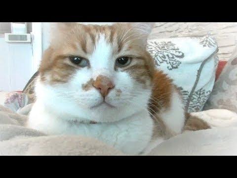 猫を褒�����ん�表情�れ��家�中�響�謎�音 ��正体��?