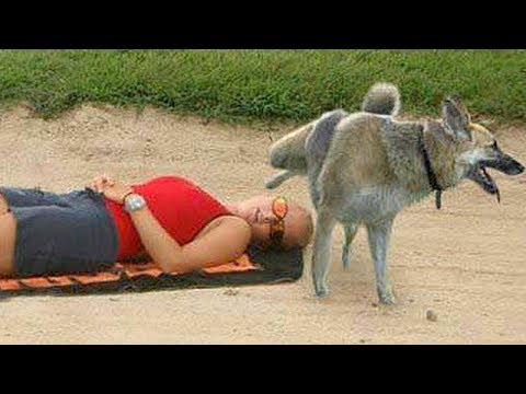 FUNNY ANIMALS on the BEACH, this is FUNNIER THAN WATCHING CATS! - Funny ANIMAL compilation