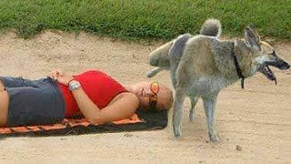 FUNNY ANIMALS on the BEACH, this is FUNNIER THAN WATCHING CATS! - Funny ANIMAL compilation thumbnail