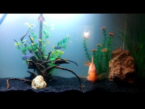 Driftwood in black sand aquarium youtube for Black sand fish tank