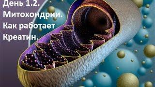 Бодитюнинг. День 1.2. От чего растут мышцы? Роль креатина в синтезе белка.(СПАСИБО ЗА ПОДПИСКУ! Приобрести курс тренировок на силу и массу «Переформатирование» можно здесь: https://bbright...., 2016-10-03T08:17:25.000Z)