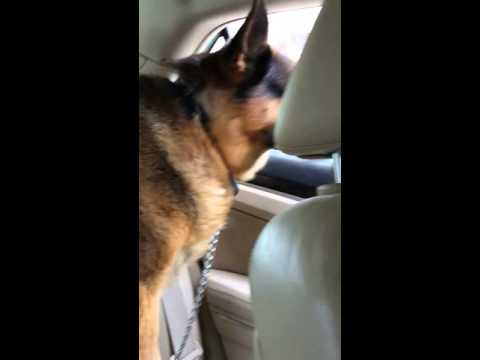 When your dog realizes he's at the Vet!