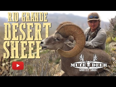Desert Sheep Hunting On The Beautiful Rio Grande River