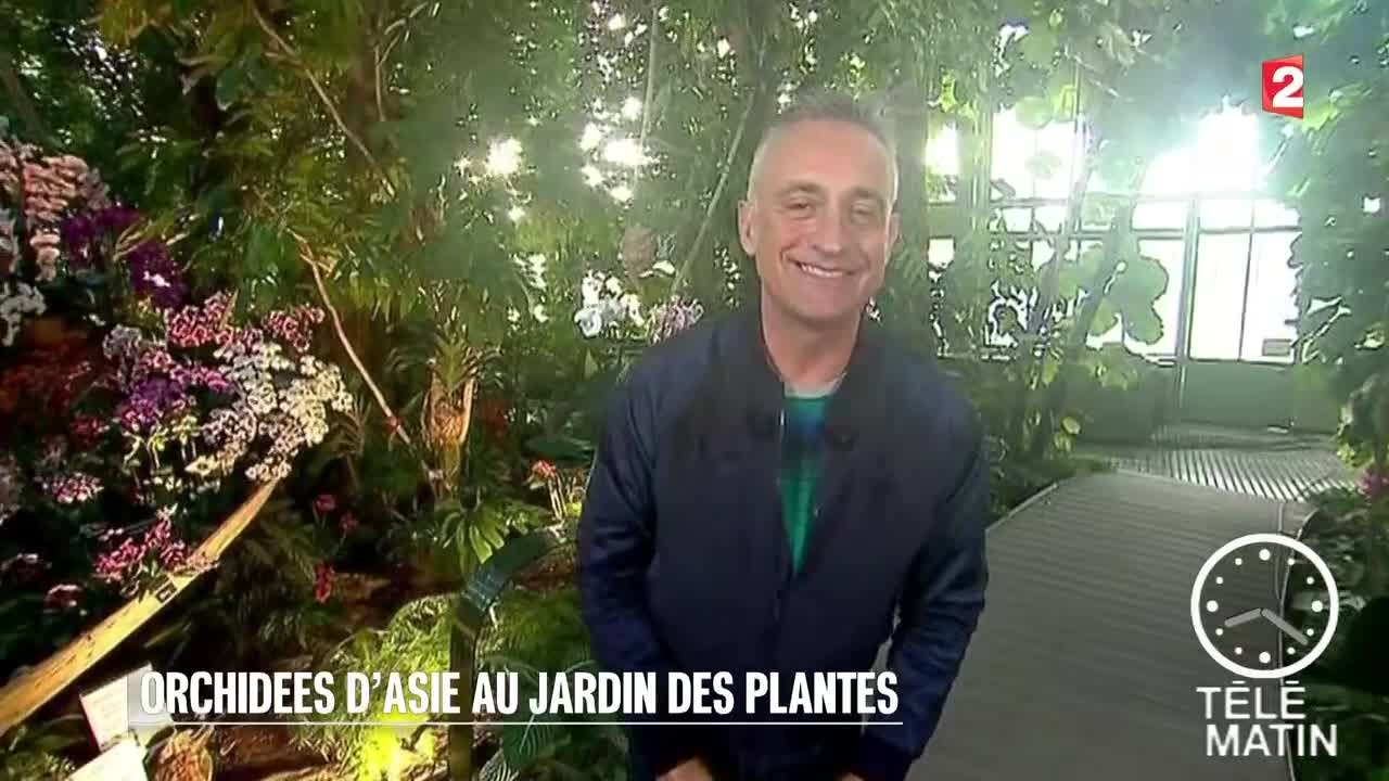 Jardin - Orchidée d\'Asie au Jardin des Plantes - YouTube