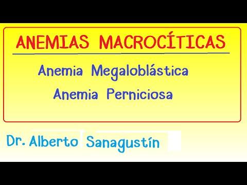 Anemias (2): Anemia Macrocítica   Megaloblástica #Hematología