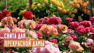 сЕЗОН 2020: ОБУСТРАИВАЕМ ЦВЕТНИК Лучшие компаньоны для роз ОСНОВЫ ДИЗАЙНА САДА / Садовый гид