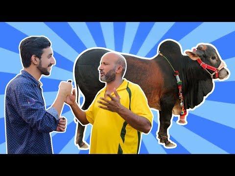 Repeat Bakra Mandi 2019 | Eid ul adha 2019 | bekaar films