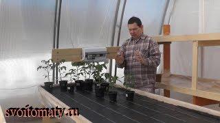 Выращивание рассады. Почему я поздно сею семена