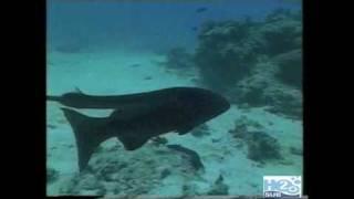 H2oSub - Barriera Corallina Australiana