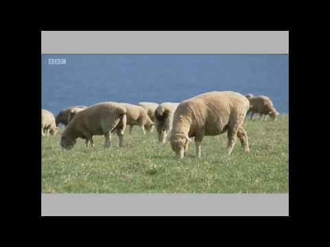 BBC TV clip - free livestock watering - Papa Ram pump
