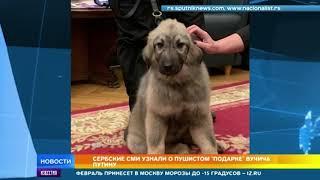 Президент Сербии захотел подарить Путину пушистого щенка