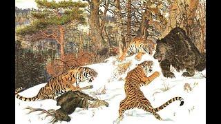 Ussuri brown bear vs Siberian tiger, interaction analysis