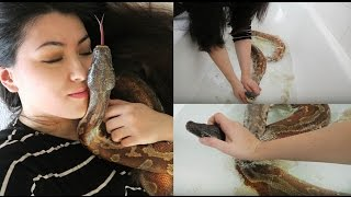 NOT AGAIN! Blood Python Stuck Shed | Removing Snake Eye Cap