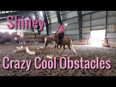 Riding challenging and unique obstacles with Shiney