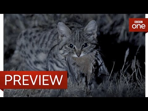 Deadliest cat on Earth - Big Cats: Preview - BBC One