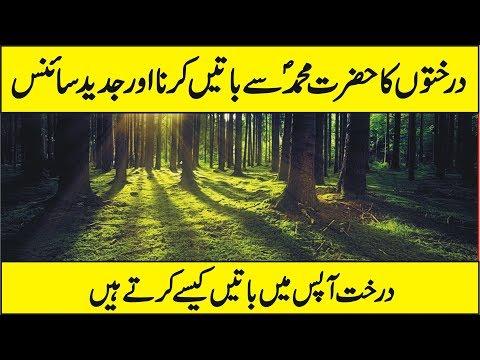 tree urdu O flowering tree - urdu - eklavya item preview remove-circle topics urdu, children's story, eklavya collection opensource.