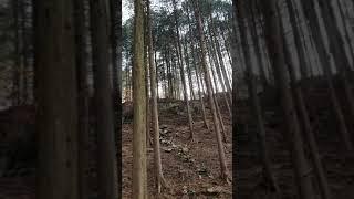 편백나무 숲!!!