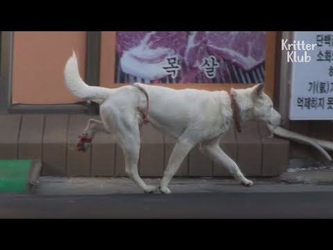 The Dog With A Mysterious Injury  Animal in Crisis EP4