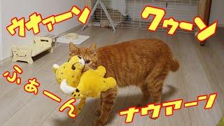 チーターを咥えると変な鳴き声が止まらない猫がかわいい!