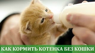 Как кормить котенка без кошки