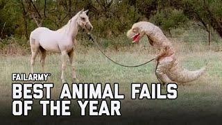 Best Animal Fails of 2020 | FailArmy