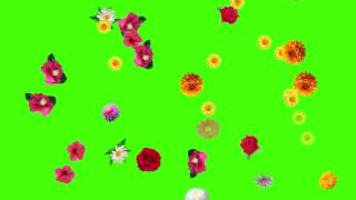 Download Video Flower fall green screen free download MP3 3GP MP4