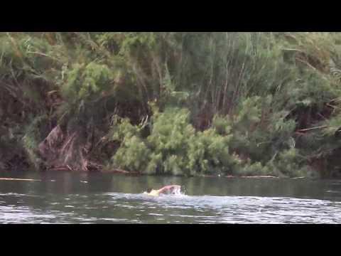 Migrante Cruza la frontera de eeuu nadando por el Río bravo. Vean hasta el final.