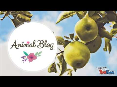Animal Blog - Projecte Empresa Col·legi Claver, Lleida