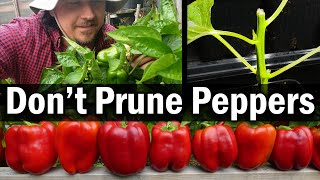 Don't Prune Your Peppers!