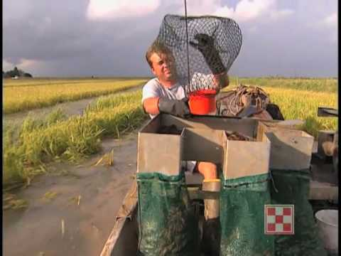 Crawfish Farming