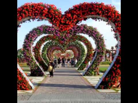 Dubai Miracle Garden full view. The world's amazing And Beautiful Places