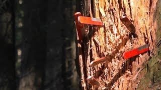 Метаю ножи и рассуждаю про чистоту в лесу