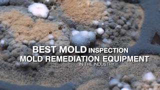 Mold Certification Training, Mold Inspection