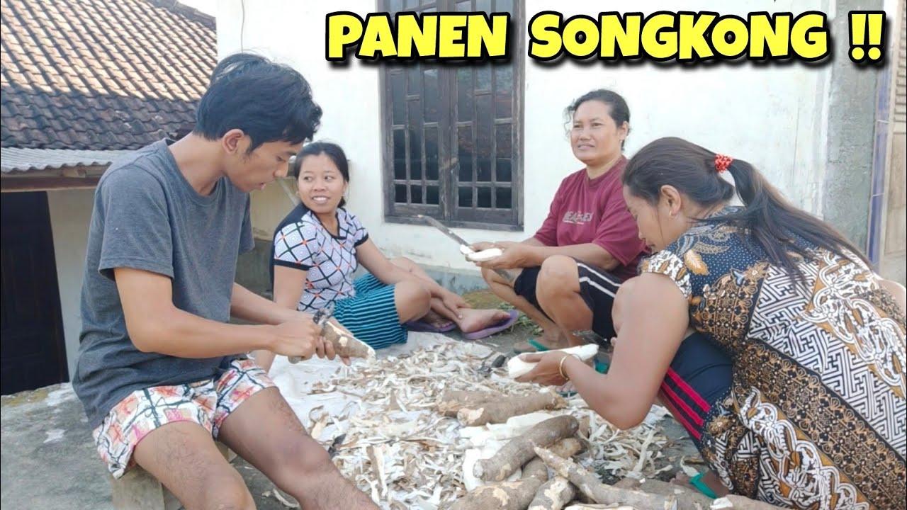 Kegiatan di kampung KUPAS SINGKONG 😀