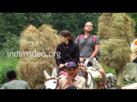 Rice Sheaves, Uttarakhand