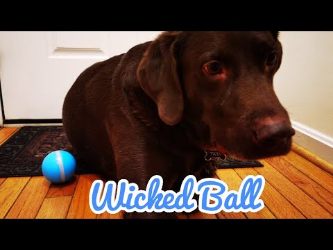 Wicked Ball - A Playmate For Your Pet