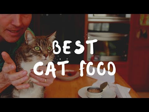 What Is Best To Feed Your Cat?