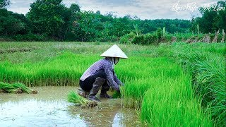 Betel Leaf Wrapped Pork Vietnamese I Am Thuc Me Lam