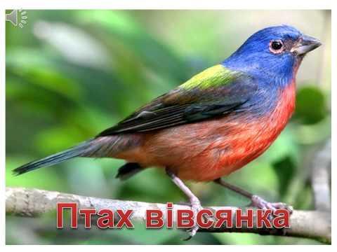 Звуки птахів