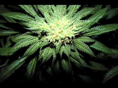 Dark Ganja Dubstep Mix for heavy smoker!