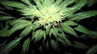 Dark Ganja Dubstep Mix for heavy smoker!